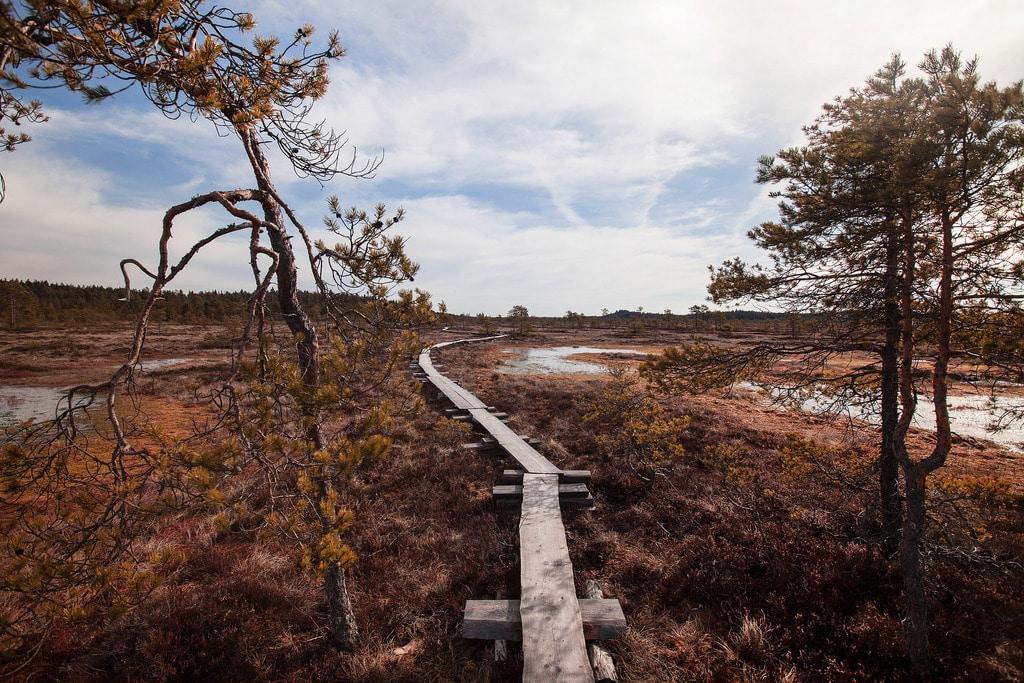 Suomiretkeilemässä Torronsuon kansallispuistossa