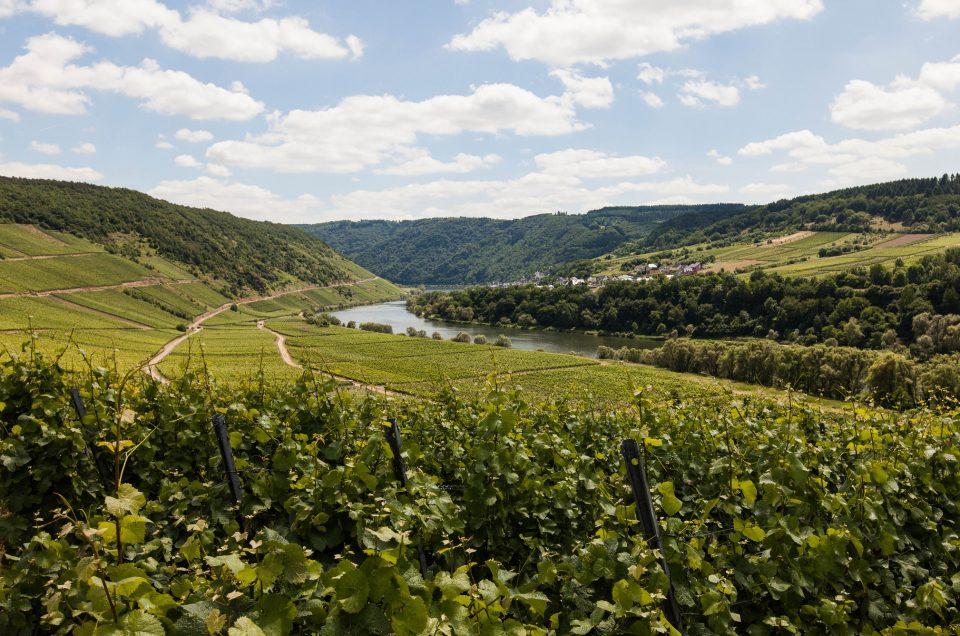 Juhannus Moselin viinilaaksossa