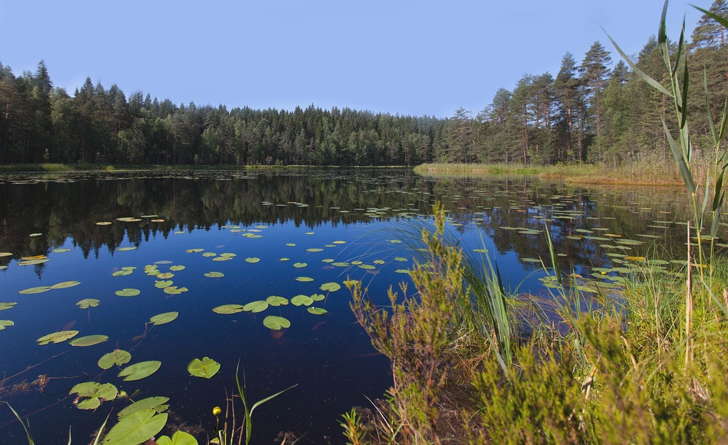 Kotimaisia unelmia | Korpinkierros, Nuuksio