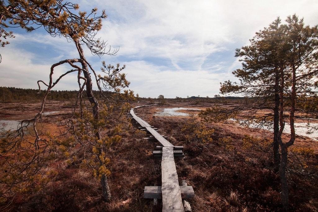 Torronsuo - Etelä-Suomen erämailla