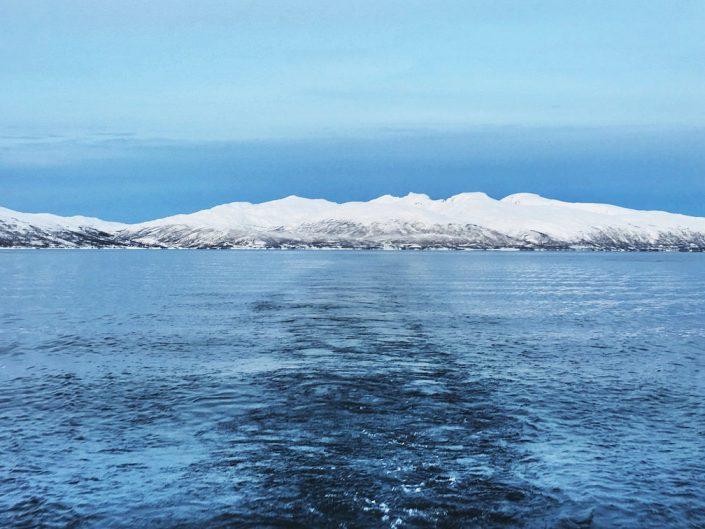 Vuonojen valassafari, Tromsø
