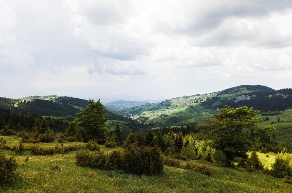 Vuoristotaimenta vehreällä vaelluspolulla