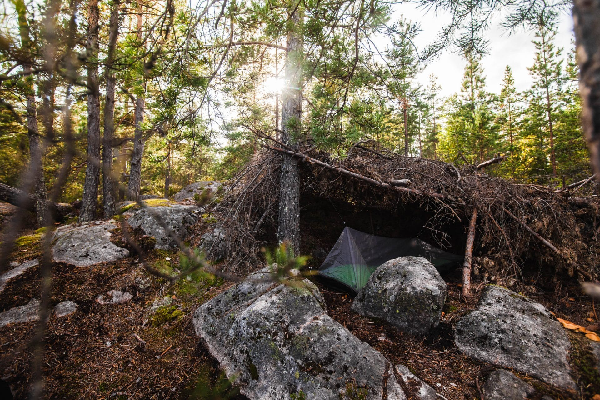 Nuuksion kansallispuisto - Onnenmyyrä metsän pesässä