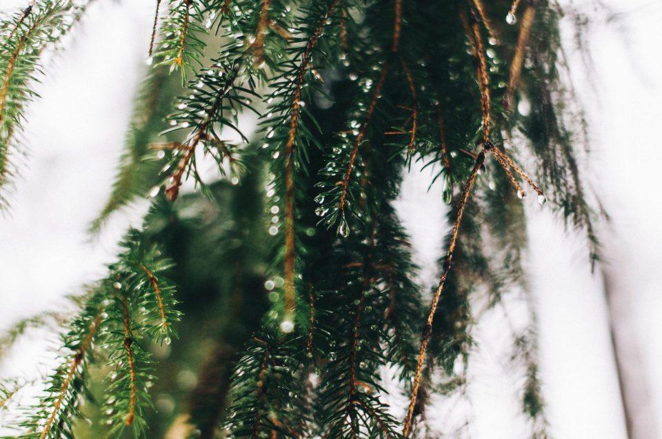 Juhlavuoden ensimmäinen Luonnon päivä