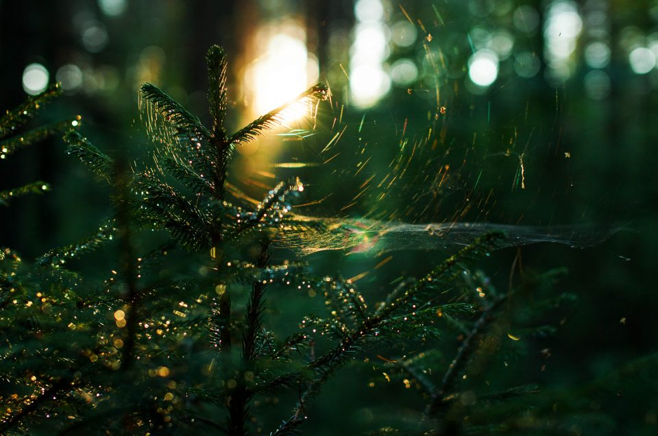 Kansainvälinen metsien päivä - Luonnontunne