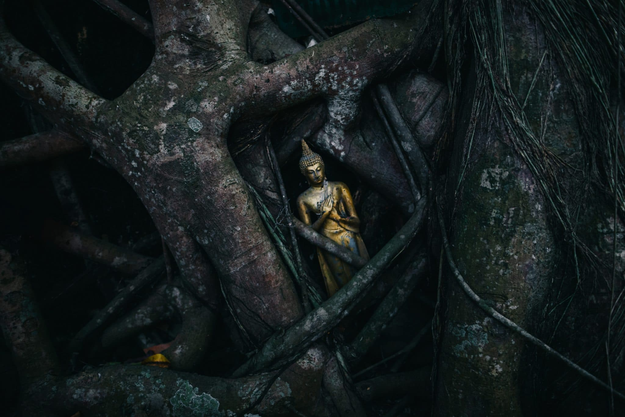 Wat Khai Bang Kung banianiviikunan piilossa
