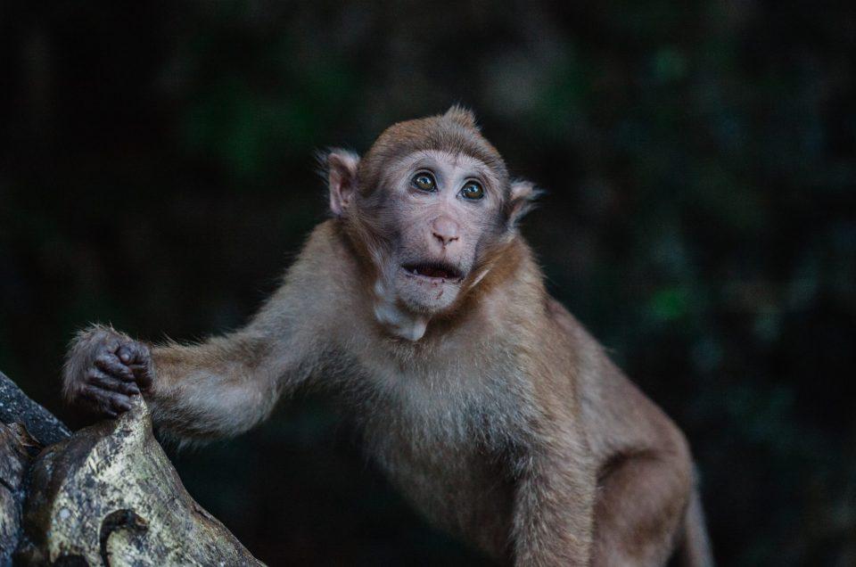 Liikkuvan kohteen ja eläinten valokuvaus