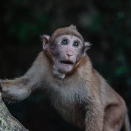 Eläinten valokuvaus
