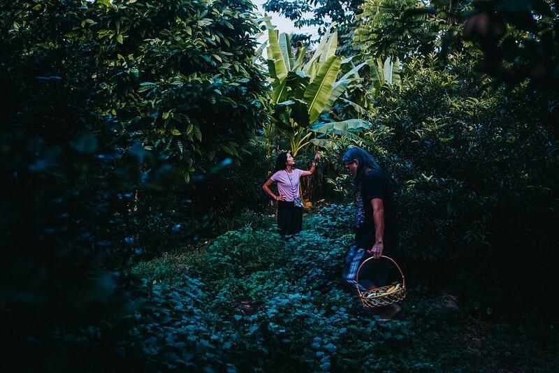 Banaanifarmin kuiskaus - yö väärässä majapaikassa