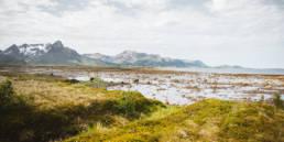 Gisløya