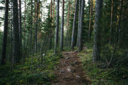 Pulkkilanharju Päijänteen kansallispuisto