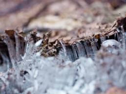 Sipoonkorven kansallispuisto