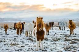 Issikkavaellus Islanti
