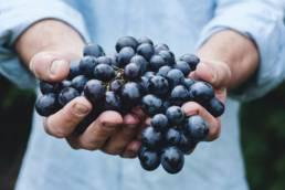Ranskan viinialueet