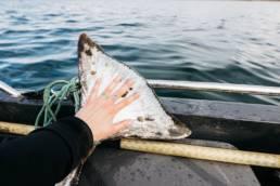 Kalastus Norjan vuonoilla